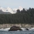 Sea lions entering Lituya Bay in current