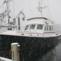 snow showers in Sitka.jpg